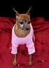 Hilt and Ruhl GiGi and Joey Pet Portraits 02 01 08 (6)