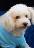Hilt and Ruhl GiGi and Joey Pet Portraits 02 01 08 (13)