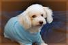 Hilt and Ruhl GiGi and Joey Pet Portraits 02 01 08 (1)