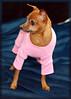 Hilt and Ruhl GiGi and Joey Pet Portraits 02 01 08 (10)
