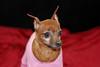Hilt and Ruhl GiGi and Joey Pet Portraits 02 01 08 (7)