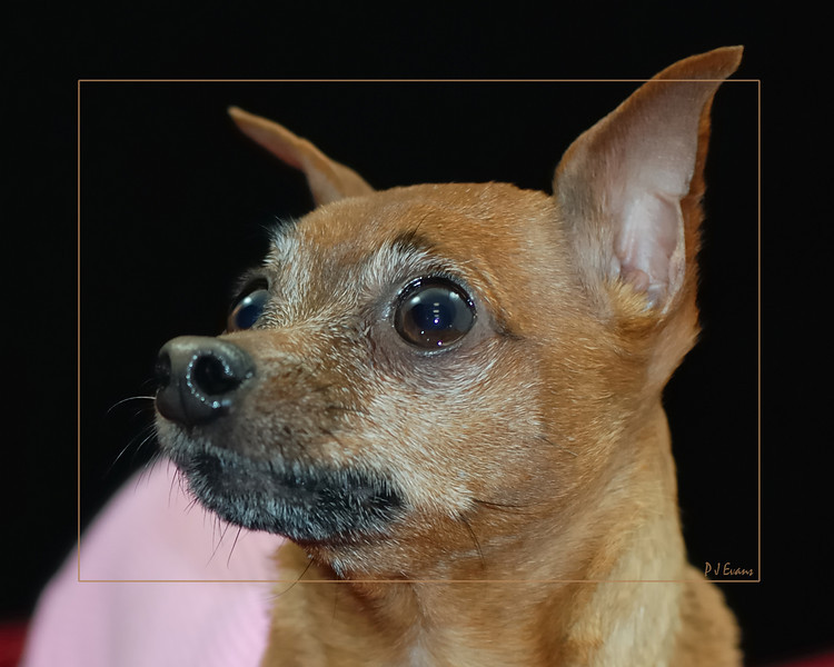 Hilt and Ruhl GiGi and Joey Pet Portraits 02 01 08 (19)