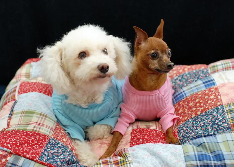 Hilt and Ruhl GiGi and Joey Pet Portraits 02 01 08 (4)