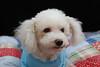 Pet Portraits 02 01 08 216