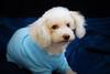 Hilt and Ruhl GiGi and Joey Pet Portraits 02 01 08