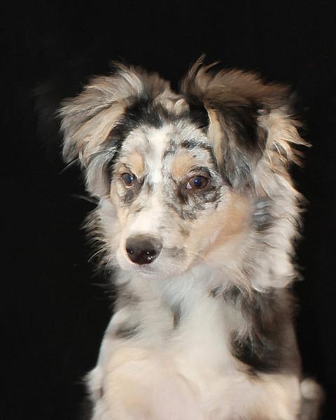 Jenkins Pet Portraits 02 01 08 090 E (3)