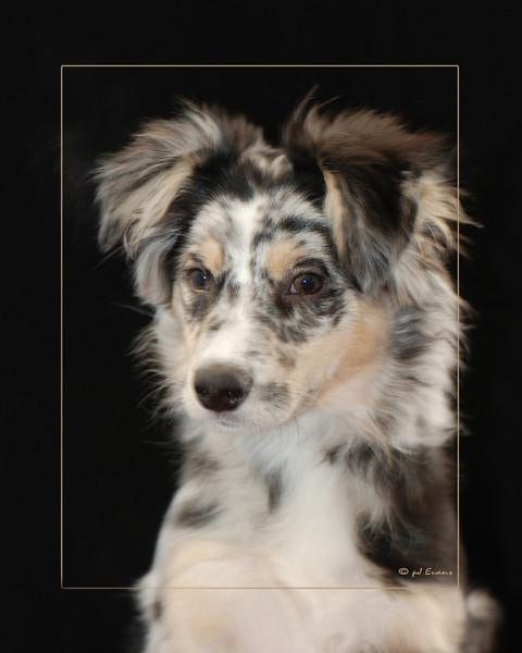 Jenkins Pet Portraits 02 01 08 090 E (4)