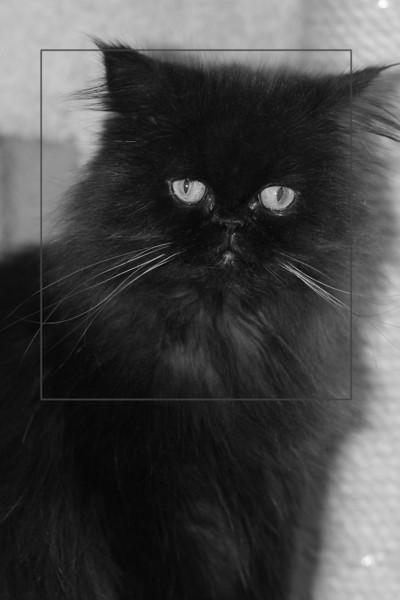Black cat w frame