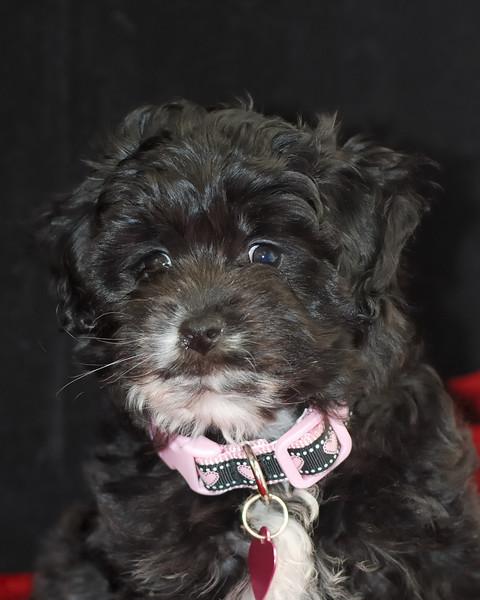 Sophia Pet Portraits 02 01 08 103 (6)