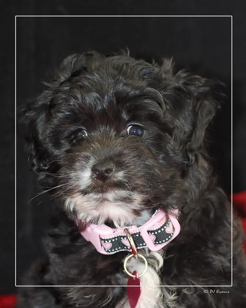 Sophia Pet Portraits 02 01 08 103 (8)