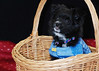 Pet Portraits 02 16 08 161 crp be