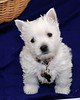 Pet Portraits 02 16 08 091_E_8x10