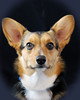 Pet Portraits 03 22 08 027 E w border