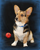 Pet Portraits 03 22 08 007 E 810 W BORDER