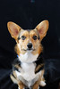 Pet Portraits 03 22 08 027 E
