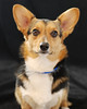 Pet Portraits 03 22 08 058 E 810