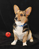 Pet Portraits 03 22 08 007 E 810