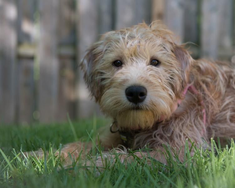 Contact me to set up a pet portrait session!