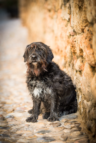 Ria, terrier, Sitges
