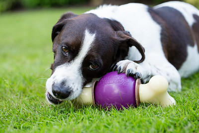 Pet Safe AJ-3606