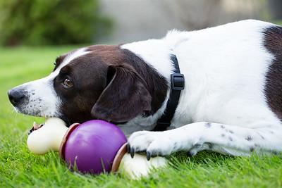 Pet Safe AJ-3615