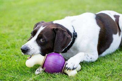 Pet Safe AJ-3618