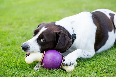 Pet Safe AJ-3619