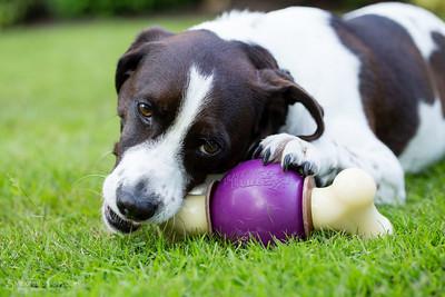 Pet Safe-3606