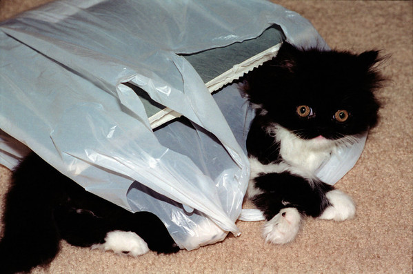 Ting Ting the kitten in a bag
