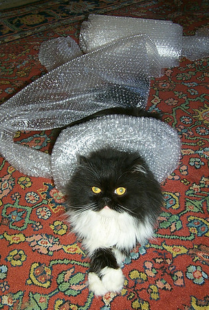Bubbly Wrap Cat