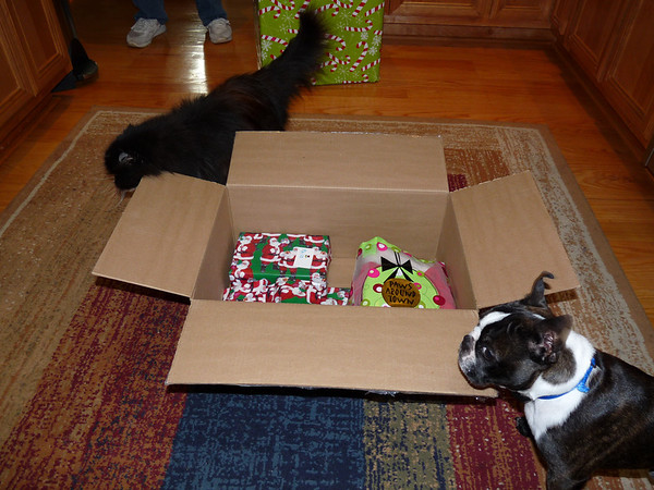"""Voila! Now the box, she is mine!"""