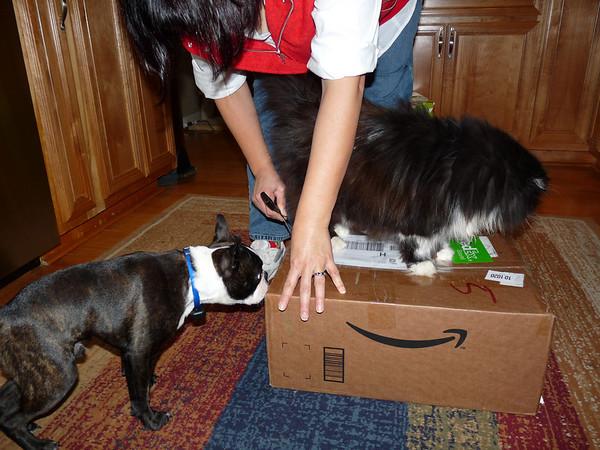 Philo supervises Phyllis