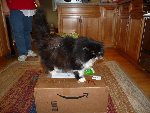 Ting Ting claims the present box