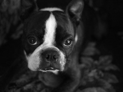 Philo portrait w my new 20mm f1.7 lens