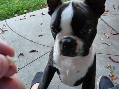 Ick! I want cheddar...