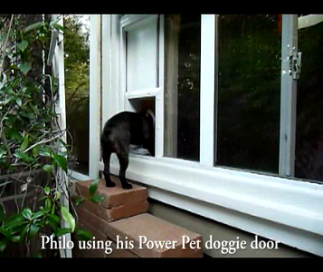 Philo using his electronic doggie door