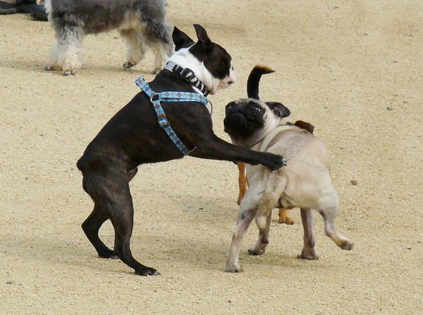 No! Don't hump me!