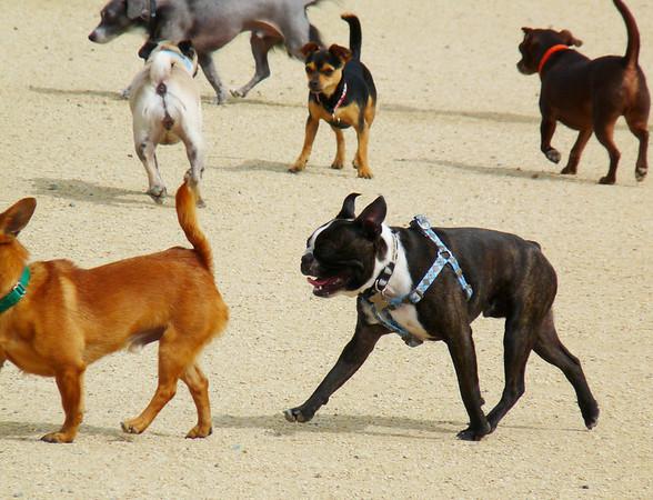 Small dog chaos