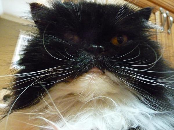 He ain't angry, he's my kitty