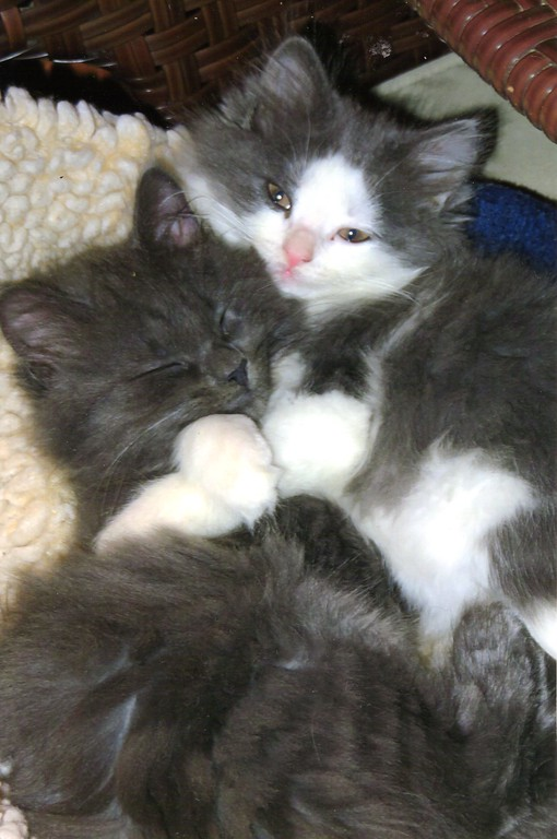 . Rescued kittens Rocky and Lucy, 7 weeks old, owned by Devon McNair of Pleasant Valley, took third place.