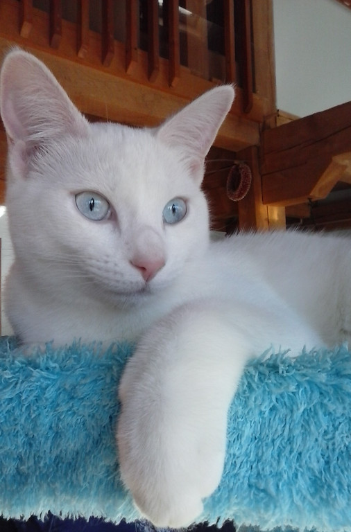 . Powder, a 6-month-old mixed-breed kitty owned by Lorraine Rengers of Woodstock, took third place. �She loves to climb and be up high!� wrote Rengers in her nomination.