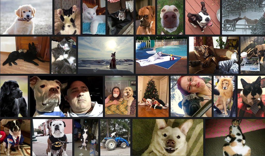 . The Freeman�s pet contest took more than 350 nominations from the Hudson Valley and the Catskills for its 14th annual edition.