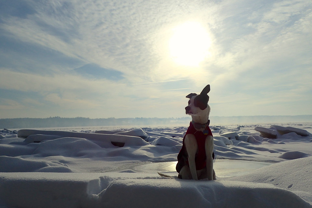 . Phoebe, a border collie, whippet mix dog owned by Steve Leibowitz of Kingston, took first place in the Best Photo Composition category with this submission featuring, Leibowitz wrote, �one morning enjoying the frozen Hudson River and the large ice chunks.�