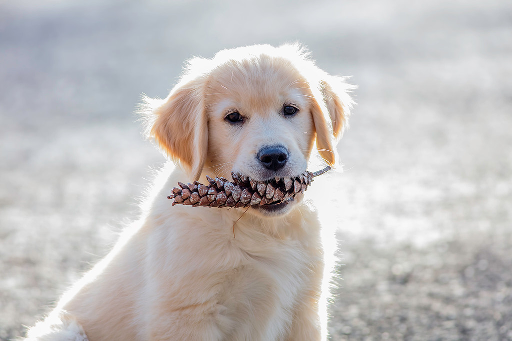 . Leo, a golden retriever puppy who is almost 11 weeks old and is owned by Charlie Murray of Kerhonkson, took first place in this year�s Best Looking Pet category.