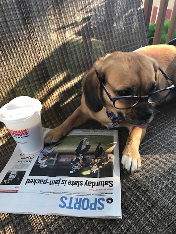 . Cutch, a 2-year-old pug and beagle mix dog owned by the Fuoco family took honorable mention. Chutch �is wise beyond his years,� wrote Nicole Fuoco.