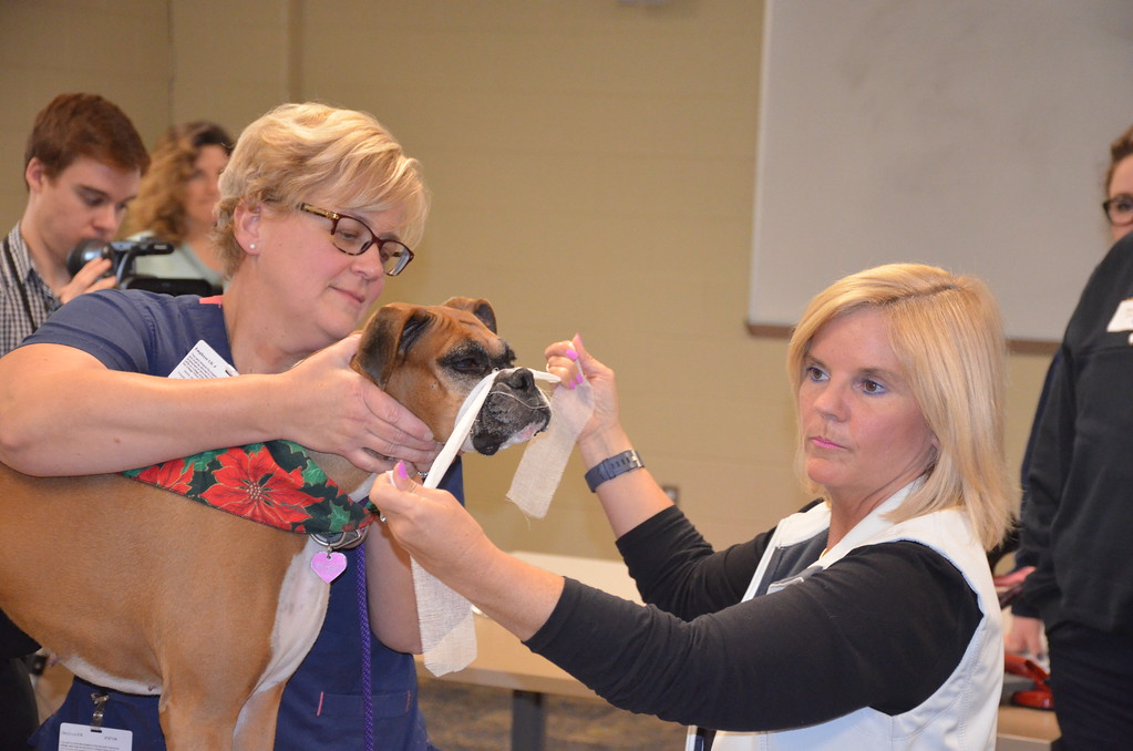. Lori Renda-Francis, right, director of the Macomb Community College\'s veterinary technician program, along with Becky Harris and a boxer named Quiz, show first responders how to create a gauze muzzle.
