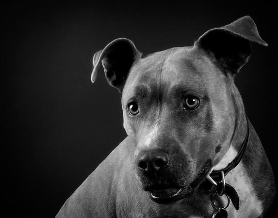 Scarlett Dog