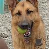 Miss Ziva and her favorite ball.