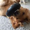 Upside down Rusty :)