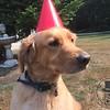 Rusty Celebrating Sadie!